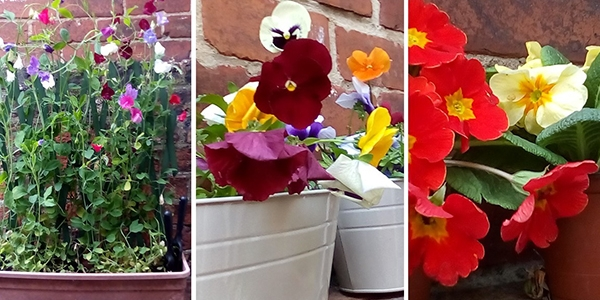 Three photos of colourful flowers in window boxes