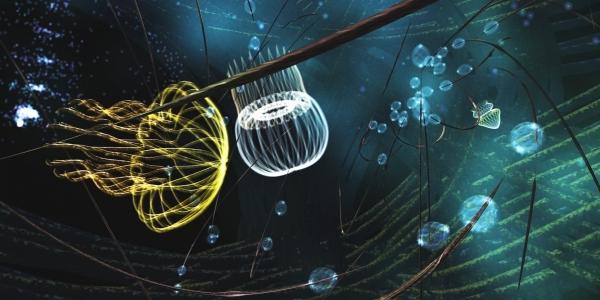 Jellyfishin'